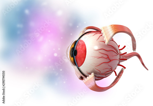 Obraz na plátne  3d human eye anatomy medical background. 3d illustration