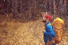 Rainy Autumn Forest, Landscape...