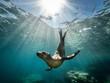 Beautiful shot of a California sea lion seal enjoying the rays of the sun in Baja California