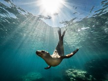 Beautiful Shot Of A California Sea Lion Seal Enjoying The Rays Of The Sun In Baja California