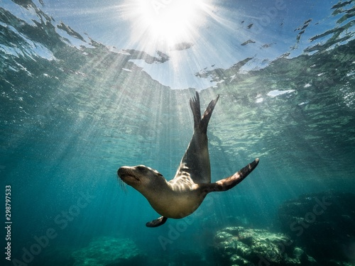 Photo Beautiful shot of a California sea lion seal enjoying the rays of the sun in Baj