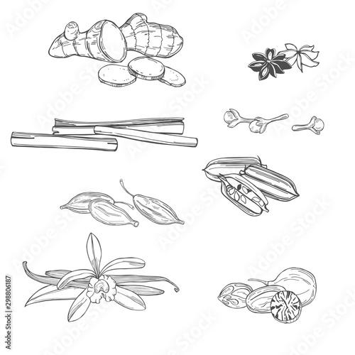 Obraz Spices for dessert and baking. Hand drawn sketch illustration - fototapety do salonu