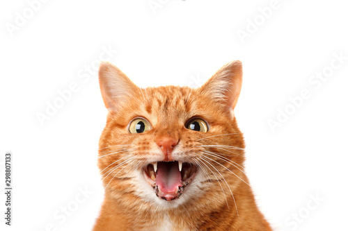 Fotografija Crazy ginger cat crying isolated on white background