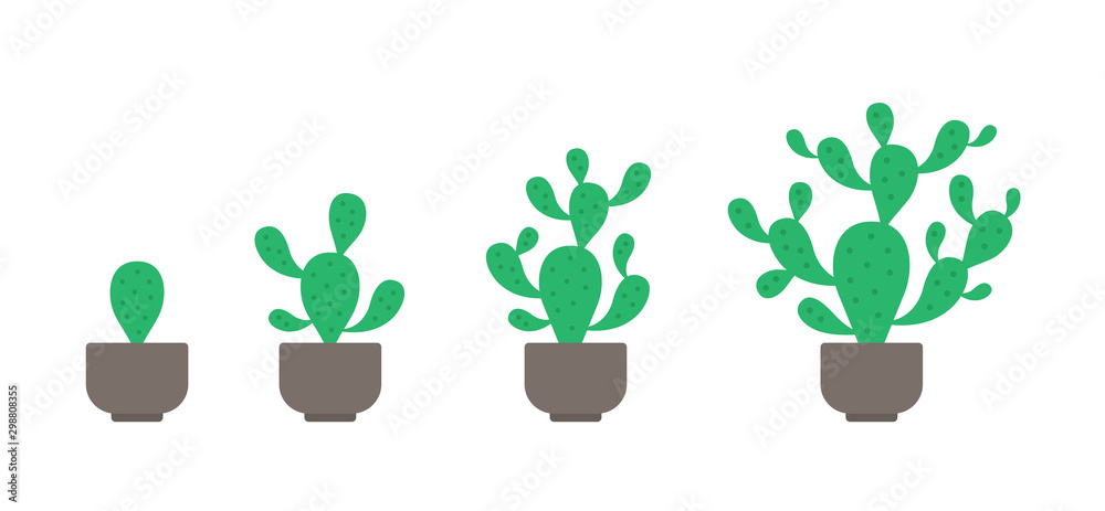 Fototapeta Prickly pear potted plant phases set. The life cycle of home cactus. Opuntia growth stages. Ripening growing period in a pot. Vector Infographic.