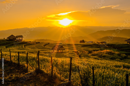 Wall Murals Rice fields Landscape view of green terraced rice field in Pa Pong Pieng , Mae Chaem, Chiang Mai, Thailand on sunset time.