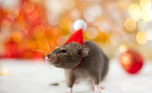 Close-up Of Golden Brown Cute Little Rat In A New Year's Hat Looking In Frame On The Soft Light Beige Background With Beautiful Luminous Yellow Blur And Christmas Ball