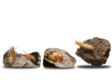 Collection Of The Termites In The Nest Isolate On White Background.