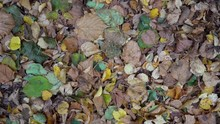 Dried And Green Leaves On Grou...