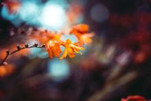 Closeup Of A Beautiful Orange Flower With Bokeh Effect