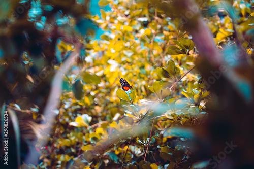 Montage in der Fensternische Schmetterlinge im Grunge Closeup nature view butterfly on a plant in the forest, grunge effect