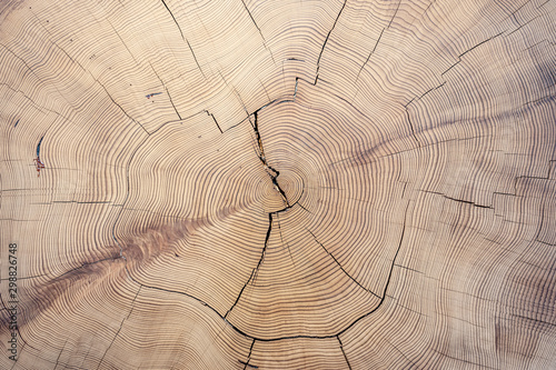 Old cut wood texture