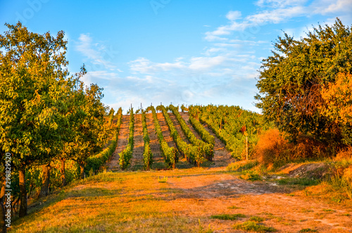 Valokuva  Stunning autumn landscape with colorful trees and rows of vineyards photographed during sunset by Zajeci, South Moravia, Czech Republic