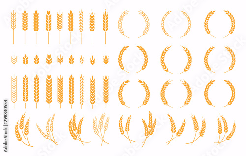 Fototapeta Set of wheats ears icons and wheat design elements. Harvest wheat grain, growth rice stalk and whole bread grains or field cereal nutritious. obraz