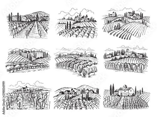 Foto auf Gartenposter Weiß Vineyard landscape. Farm grape fields with houses agricultural hand drawn vector illustrations. Farm vineyard, landscape field agriculture