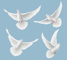 White Pigeons. Dove Love Flyin...