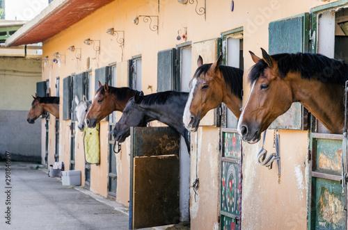 Vászonkép Horses in a stable, horizontal
