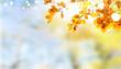 canvas print picture - Vibrant fall foliage