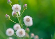 Closeup Detail Of Flowering Pl...