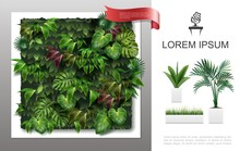 Realistic Home Plants Concept