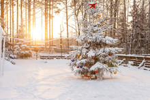 Christmas Tree In The Backyard...