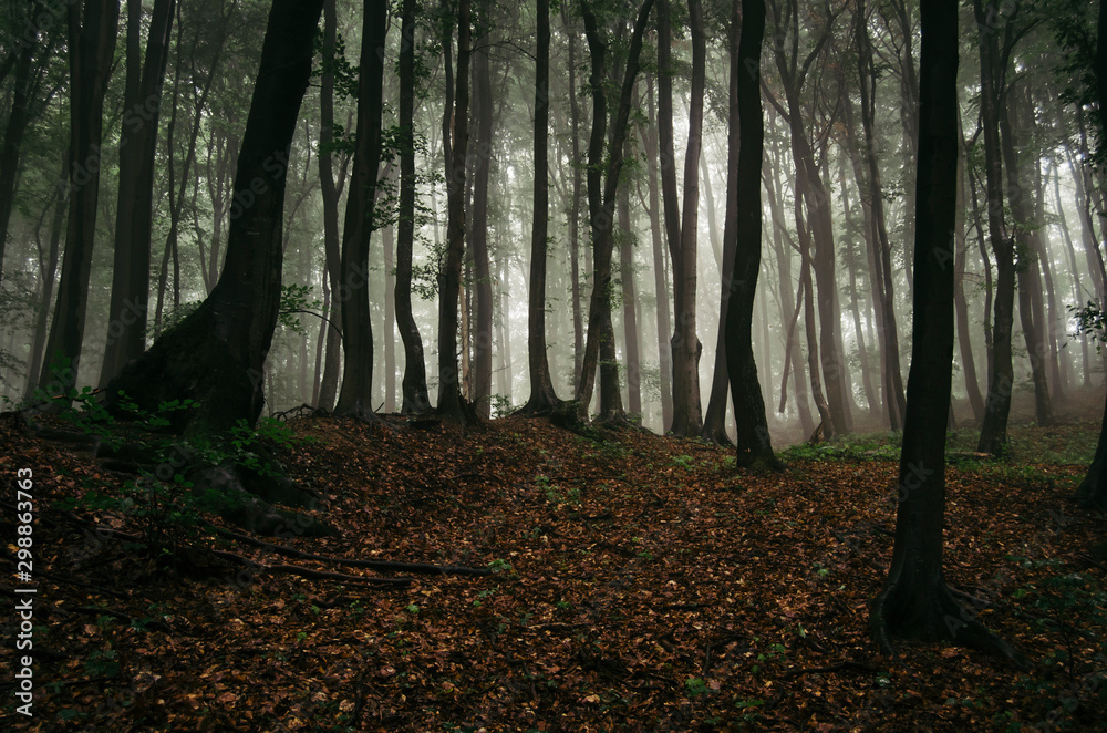 Fototapety, obrazy: dark woods background, autumn forest landscape