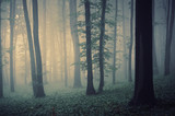 magical forest landscape with trees in fog