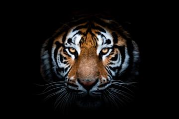 Portret tigra s crnom pozadinom
