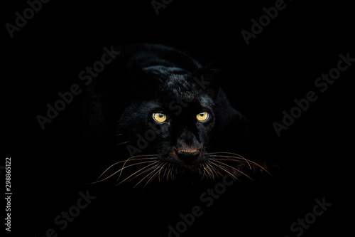black-panther-with-a-black-background