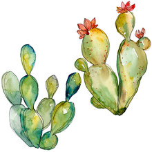 Green Cactus Floral Botanical ...