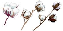 White Cotton Floral Botanical ...