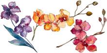 Orchid Floral Botanical Flower...