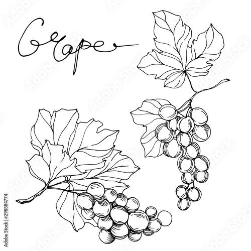 Foto Vector Grape berry healthy food