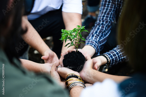 Fotomural  Group of environmental conservation people holding young plant in hands, together planting tree