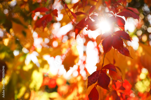 Tree branch with sunlit bright leaves in park, closeup. Autumn season