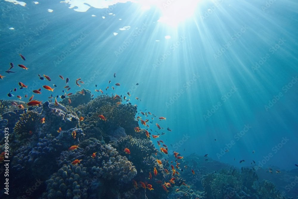 Fototapeta Life-giving sunlight underwater. Sun beams shinning underwater on the tropical coral reef. Ecosystem and environment conservatio