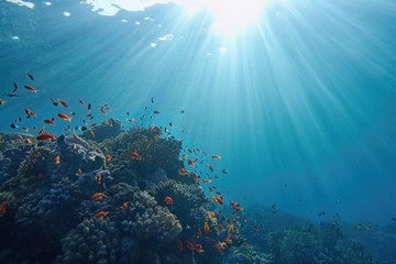 Fototapeta na wymiar Life-giving sunlight underwater. Sun beams shinning underwater on the tropical coral reef. Ecosystem and environment conservatio