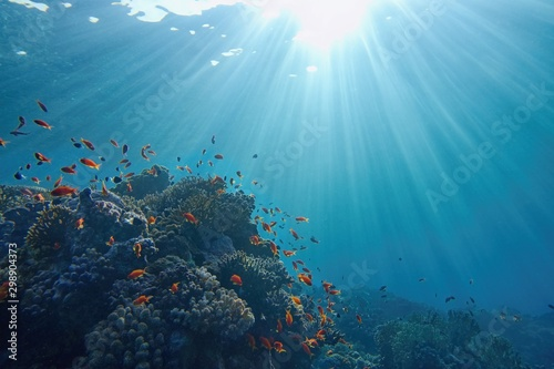 fototapeta na ścianę Life-giving sunlight underwater. Sun beams shinning underwater on the tropical coral reef. Ecosystem and environment conservatio