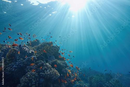 Life-giving sunlight underwater Canvas-taulu