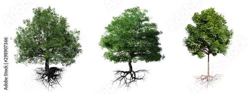 Fototapeta tree set with roots isolated on white background obraz na płótnie