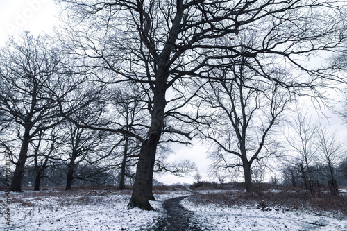 Photo Winter landscape in Richmond Park