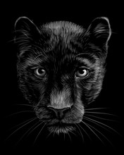 Panther. Artistic, Sketchy,  Black And White Portrait Of A Panther Head On A Black Background.