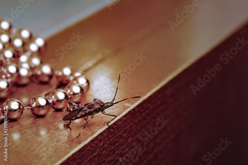 Western conifer seed bug walking across the table at a Christmas chain of beads Obraz na płótnie