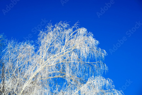 Foto op Plexiglas Donkerblauw A Trees on the Sky