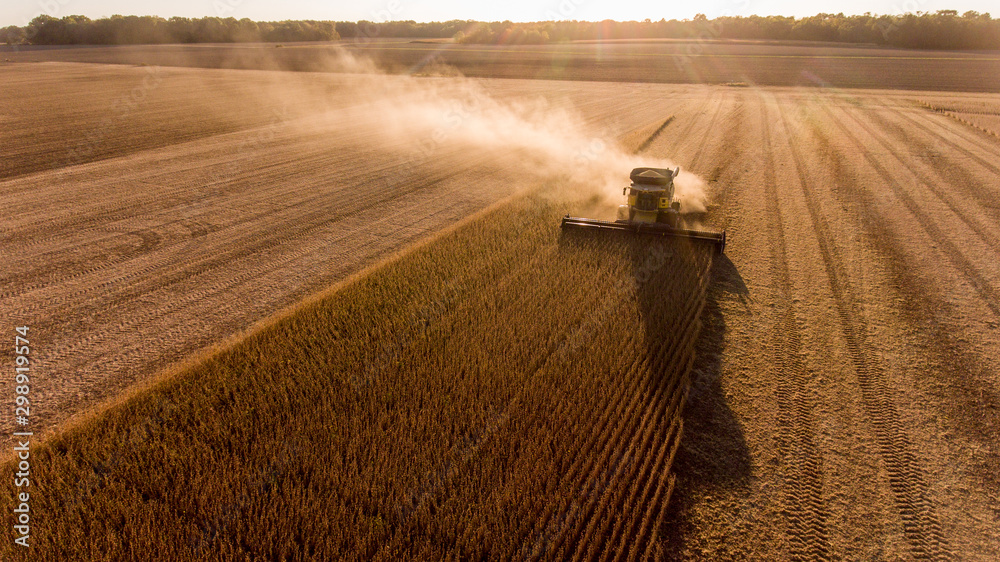 Fototapeta Farmer harvesting soybeans in Midwest