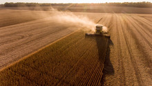 Farmer Harvesting Soybeans In ...