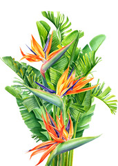 Fototapeta Malarstwo bouquet of tropical flowers and leaves, Strelitzia reginae on an isolated white background, watercolor tropical plants, botanical illustration, greeting card, bird-of-paradise