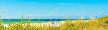 Panorama Sunny Beach With Gras...