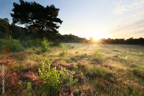 Foto morning sunshine over wild meadow in forest
