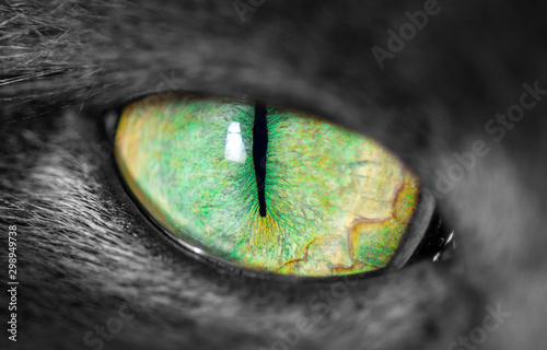 Leinwand Poster Cats eye with narrow pupil