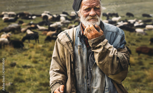 Fotografia Male old shepherd is looking at camera on herd background